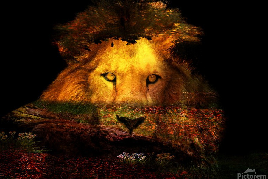 The Lion Watches  Print