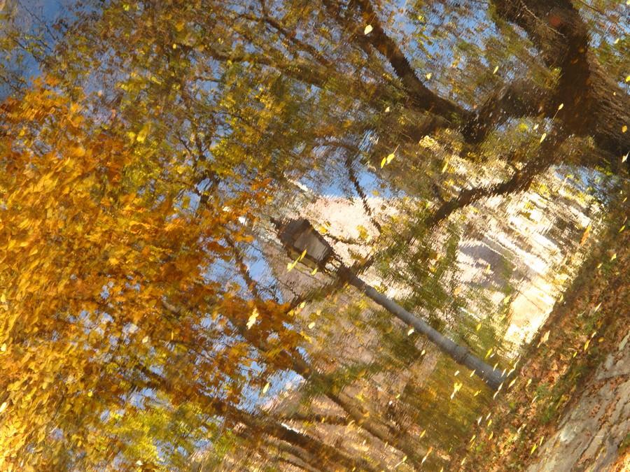 Autumn Reflections I  Print