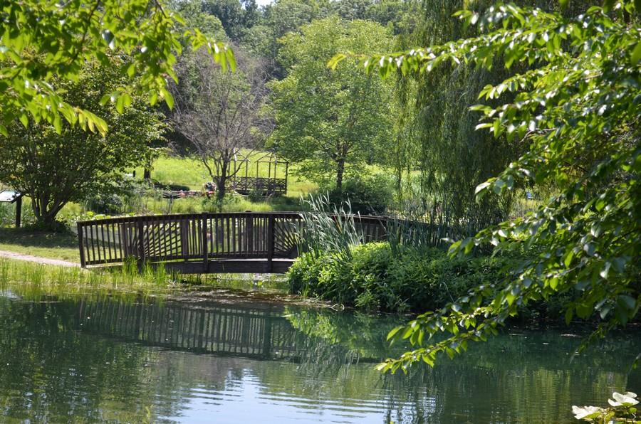 Bridge over pond  Print