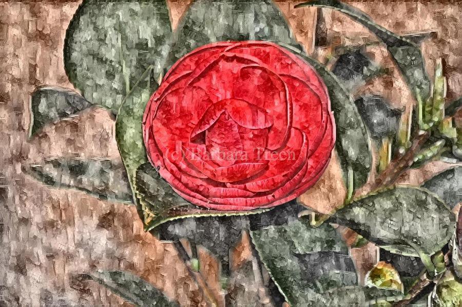 Camelia Blossom 11  Print