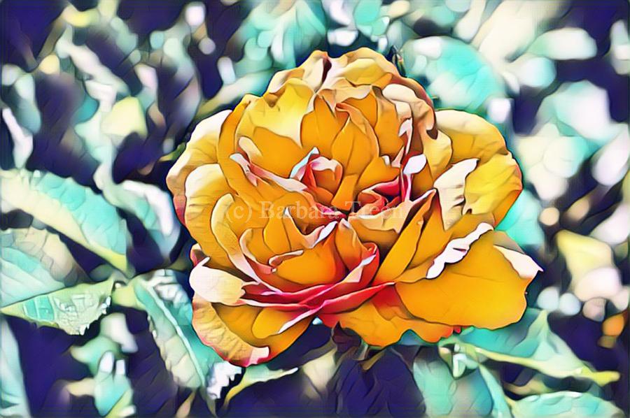 Rose in Yellow  Print