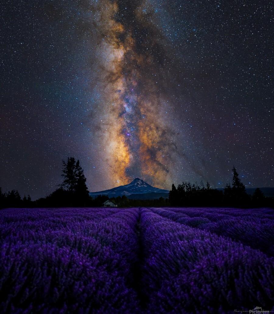 Lavender Valley  Print