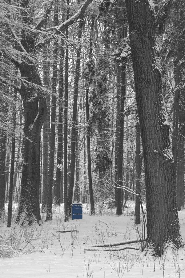 Blue Barrel in Woods  Print