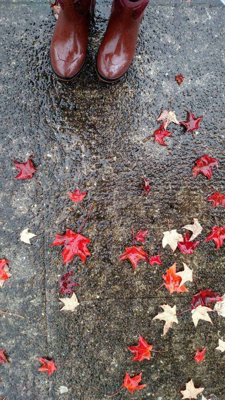 Autumn Rain  Print