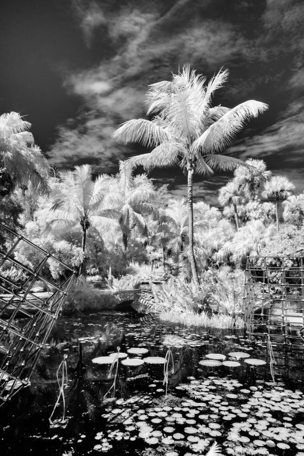 McKee Gardens  Vero Beach  Florida  Print