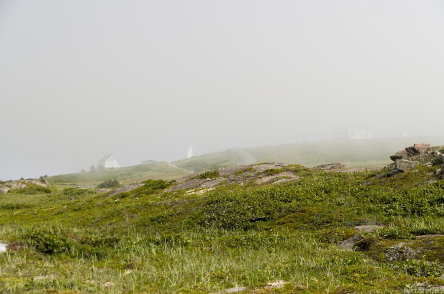 View from Cape Spear Walking trails  Print
