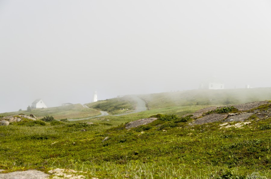 View from Cape Spear Walking trails 15  Print