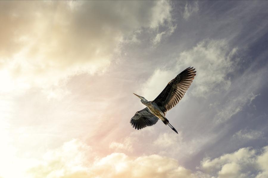 Heron Sunrise  Print