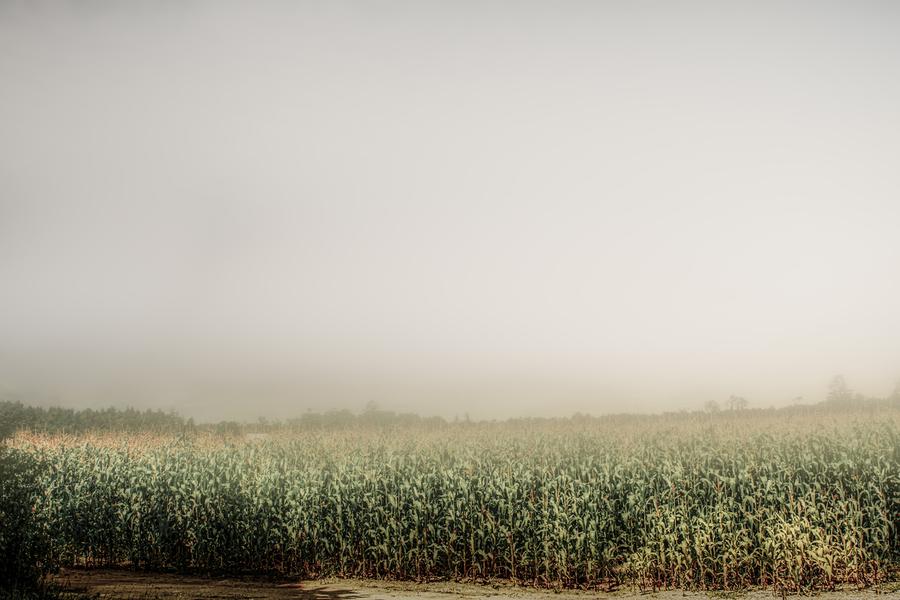 Summer Dust Cornfield  Print