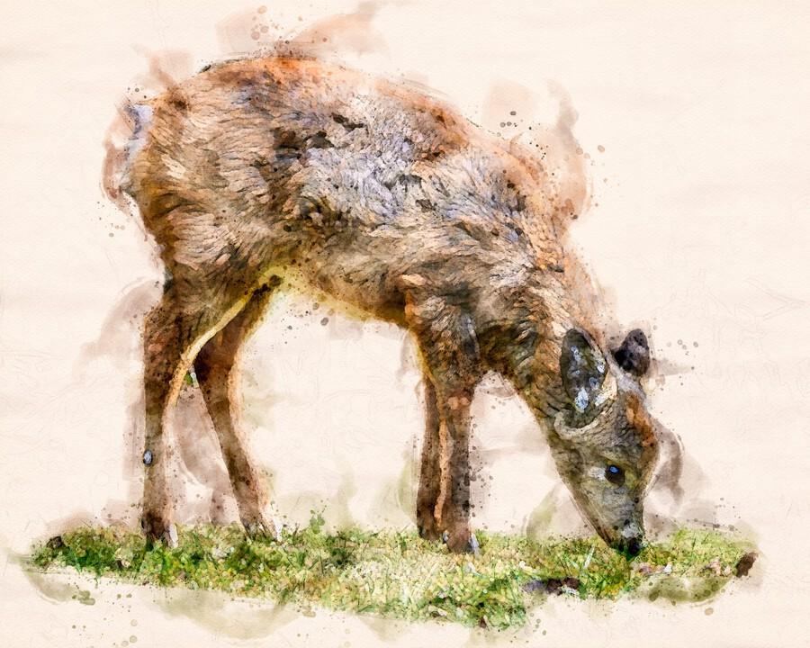 White Tail Deer  Print