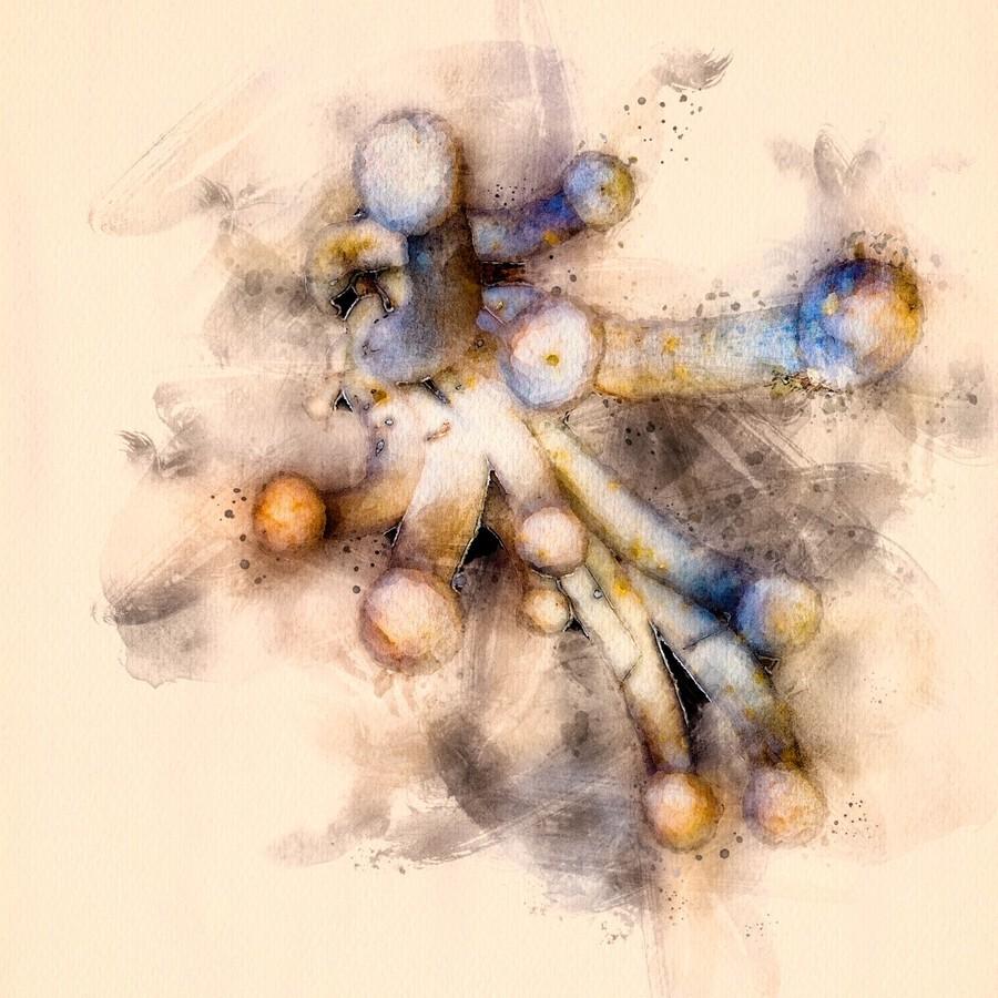 Tasty Mushroom Abstract  Print