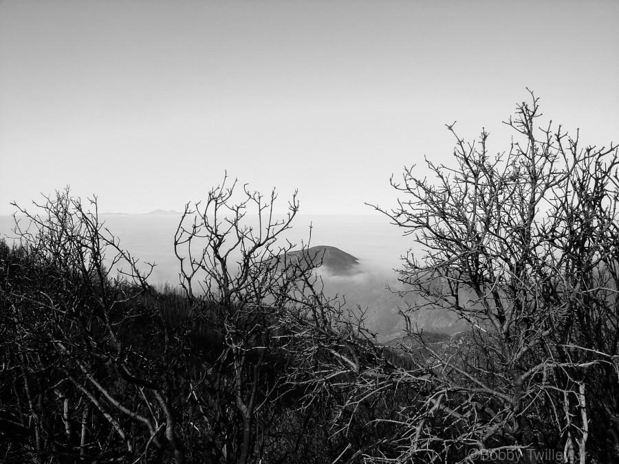 California Clouds through Mountain Brush in B&W  Print