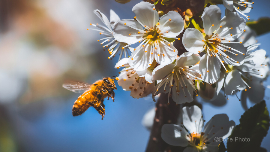 Blossom & The Bee  Print