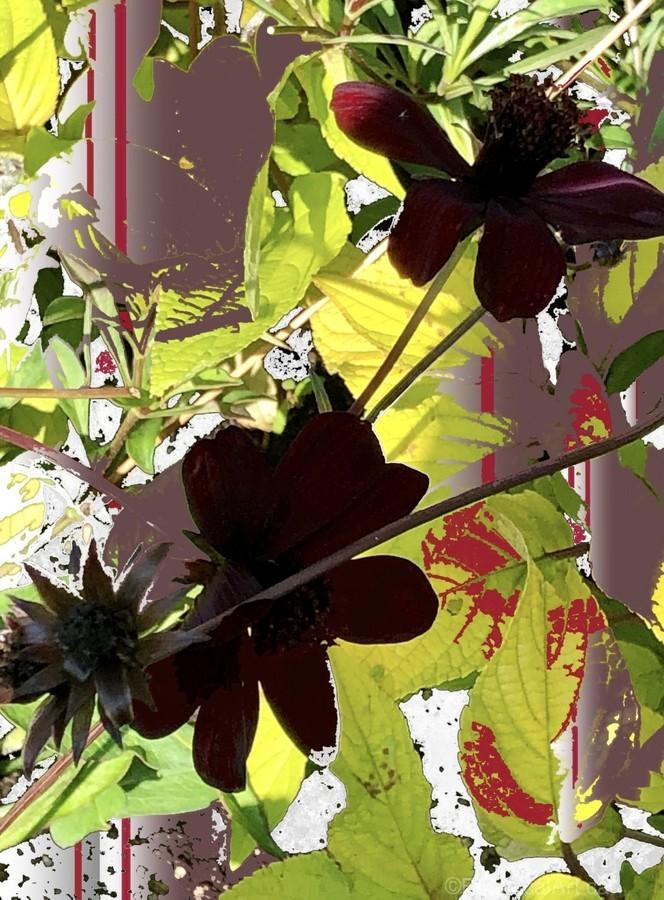 Mixed Floral Arrangement 200719  Print