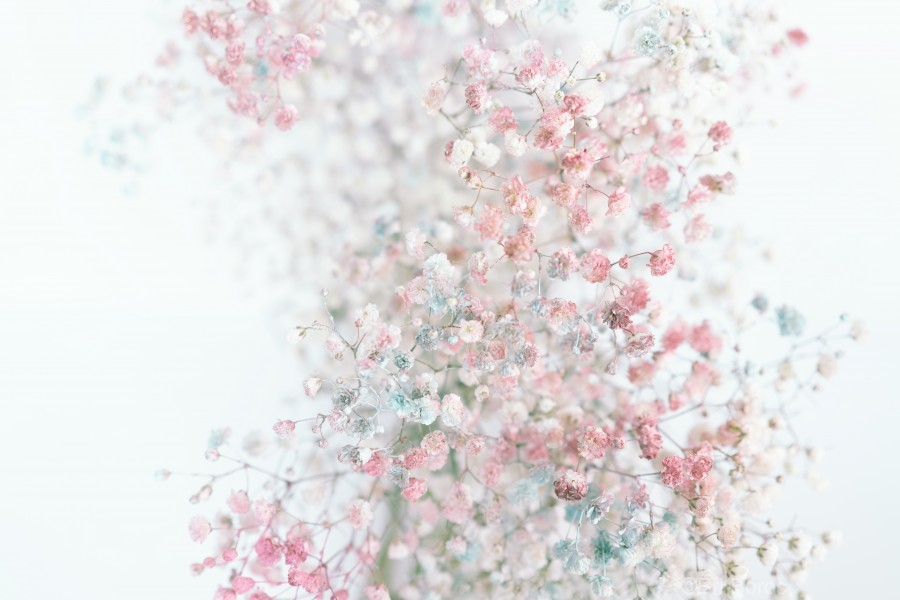 Daltana Pastel Floral Ceiala  Print