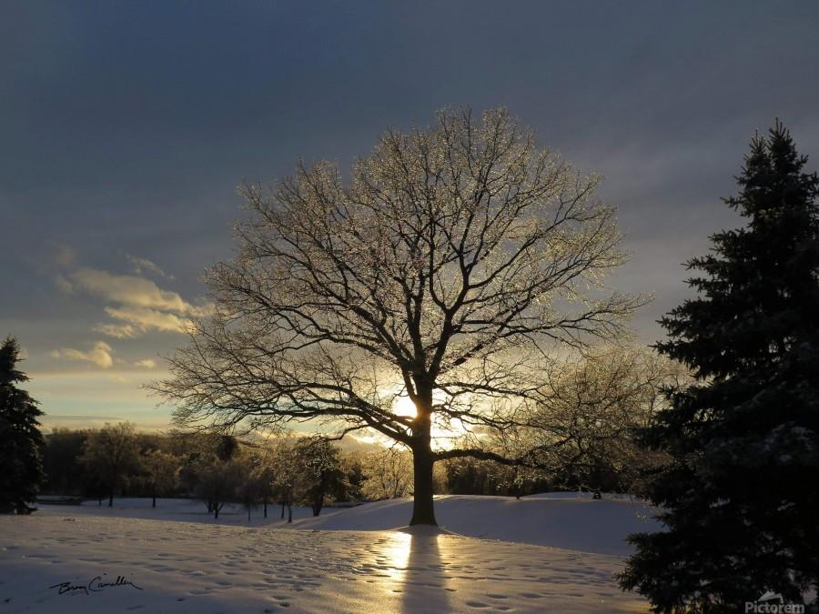 Winter Oak  Print