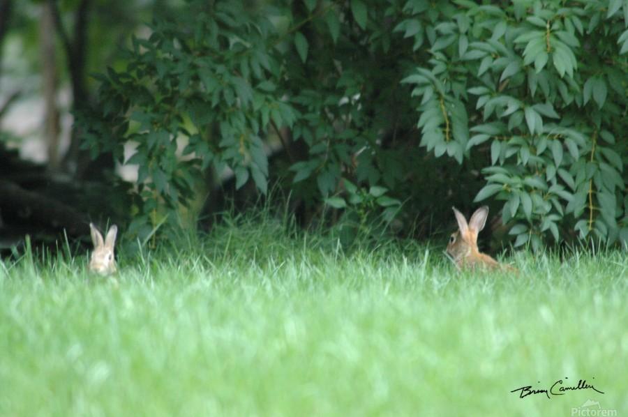 Bunnies Two  Print