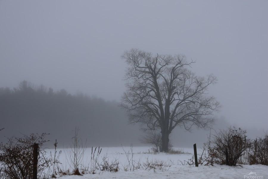 Tree in the Mist  Print