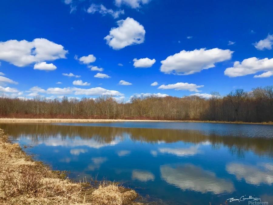 Pond Reflections  Print