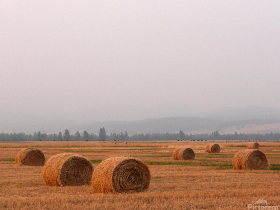 Haybales in a Haze  Print