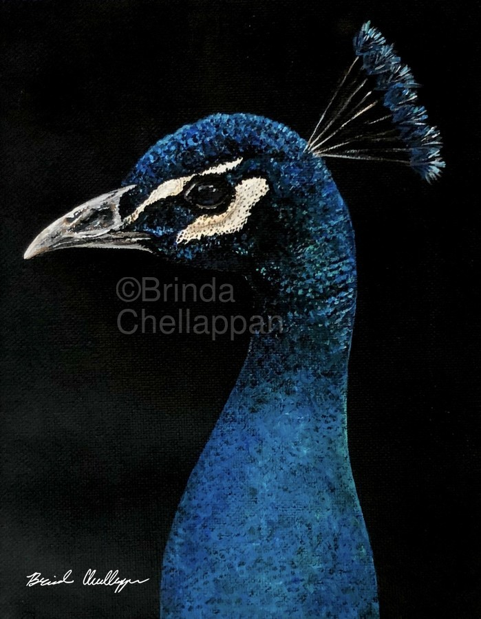 Peacock Portrait  Print