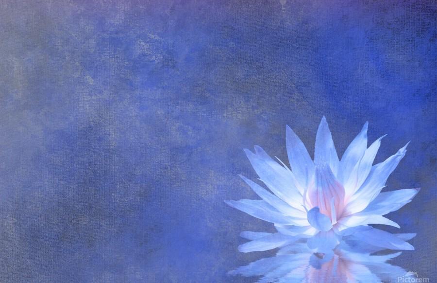 Lotus Blossom  Print