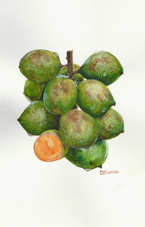 Spanish Lime  Print