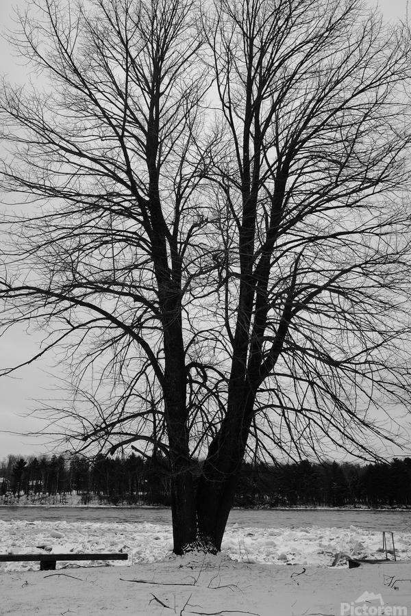 L'arbre de vie  Imprimer