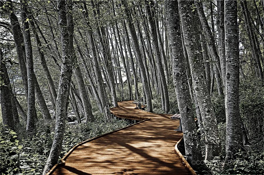 Boardwalk in the Woods  Print