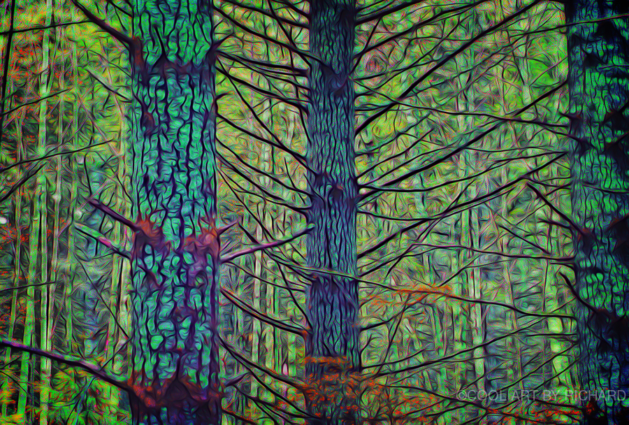Forest Splendor  Print