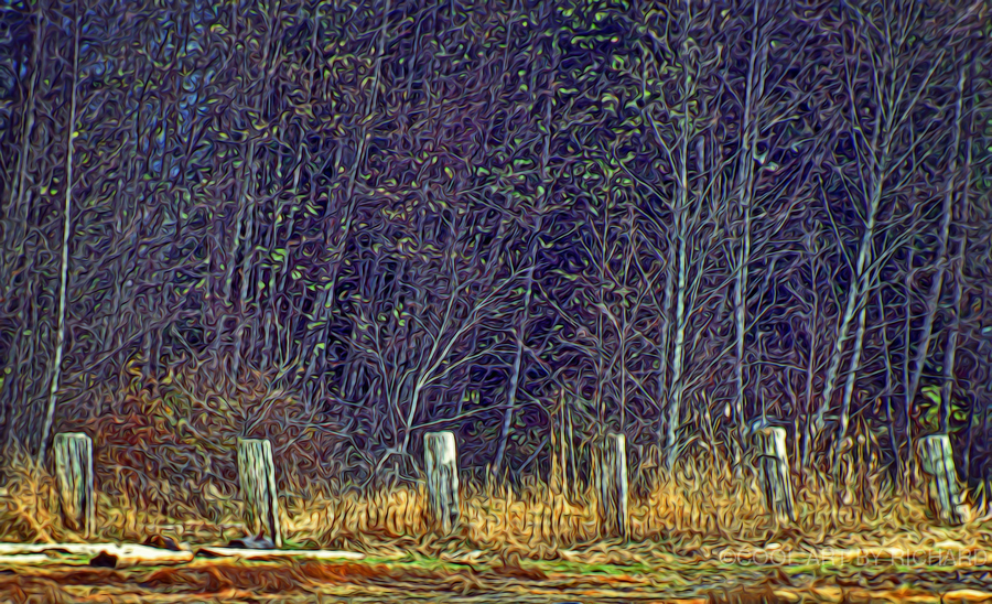 Weathered Fence Posts  Print