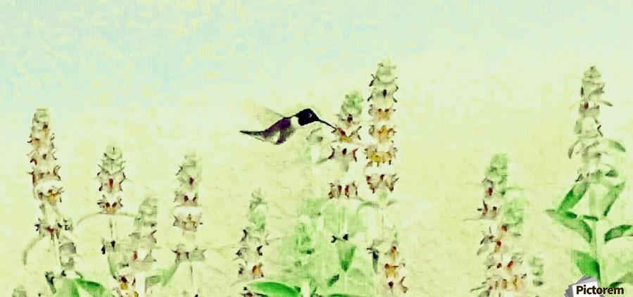 The Hummingbird  Print