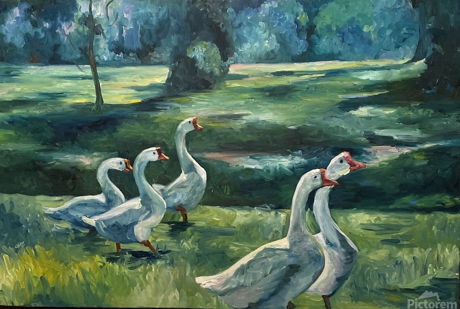 Geese at St. Francisville  Print
