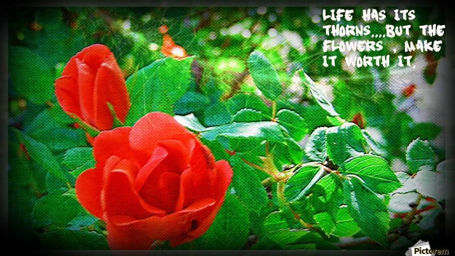 life , Chazzi R  Davis ,