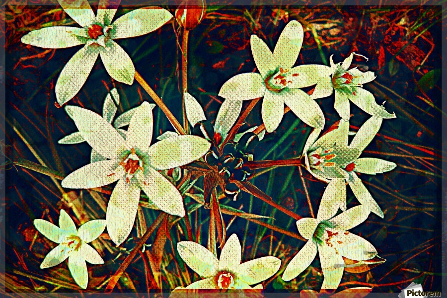 WhiteDarkWallflowers