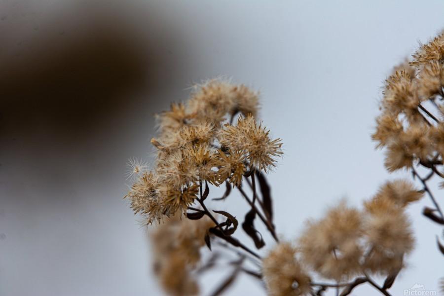Winter Flowers  Print