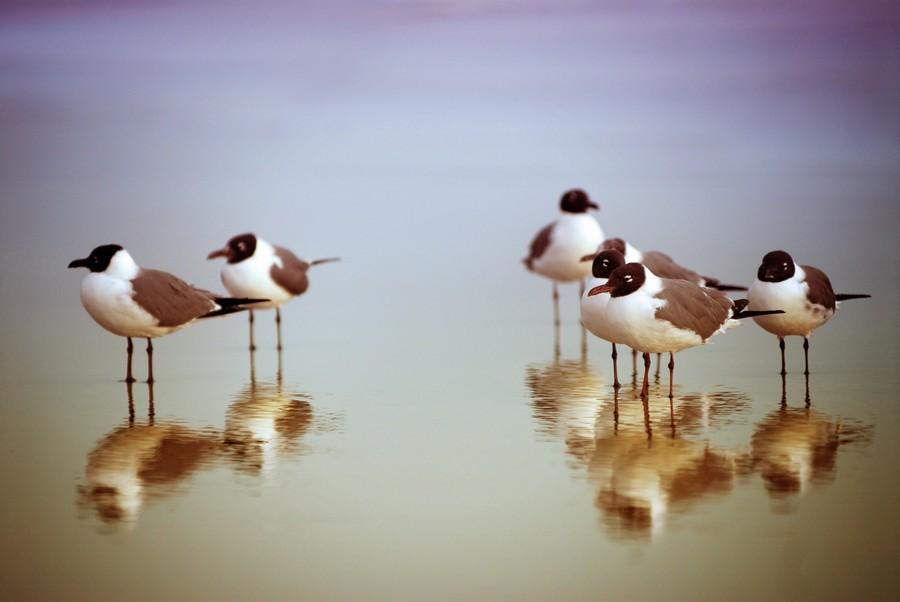 Birds on the Beach  Print
