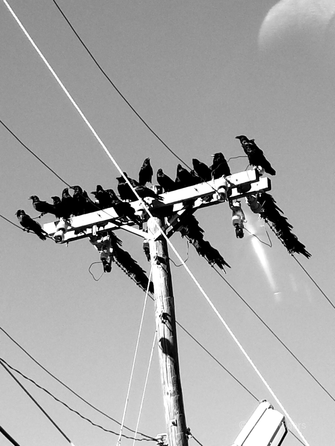 Birds on a wire  Print