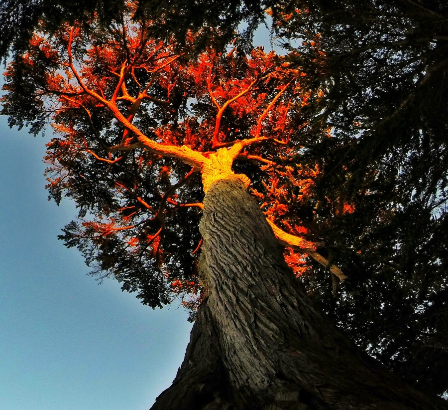Tree on Fire  Print