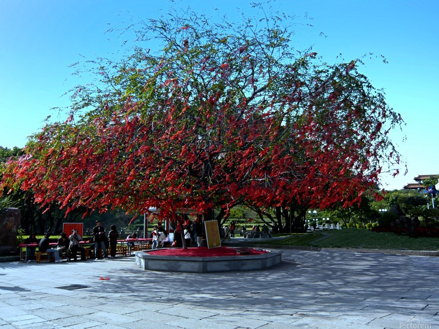 P36 - Red Red Tree  Print