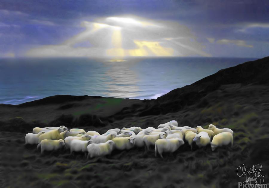 Sheep grazing  Print