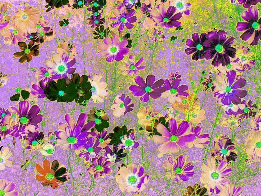 Flowers Garden Purple  Print