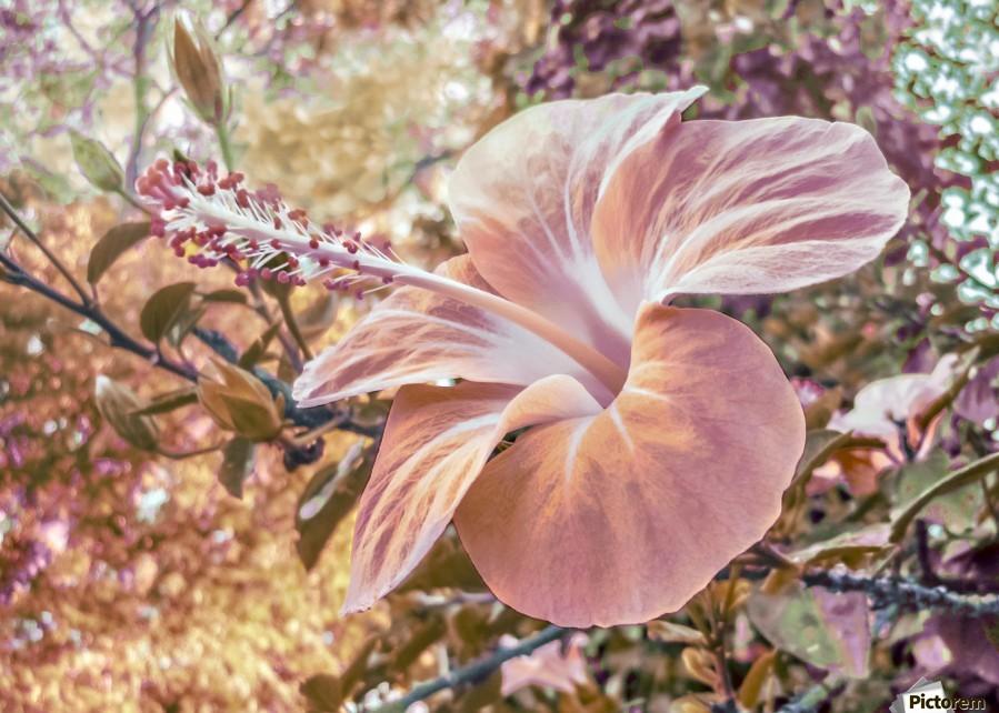Fantasy Colors Hibiscus Flower Digital Art Daniel Ferreia Leites