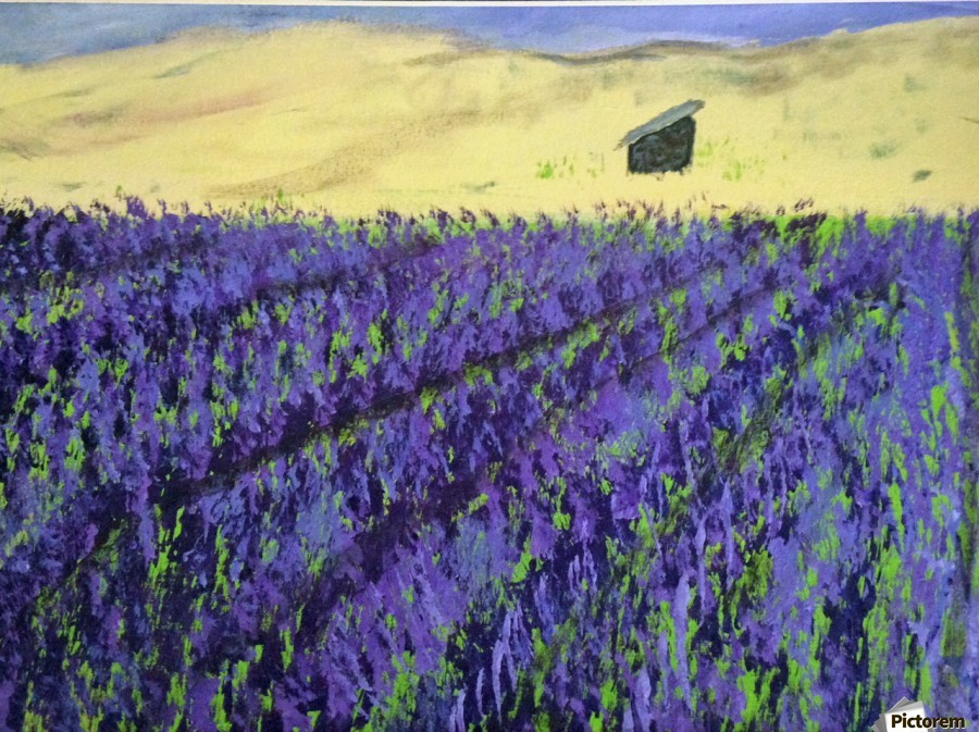 Purple Lavender fields painting  Print