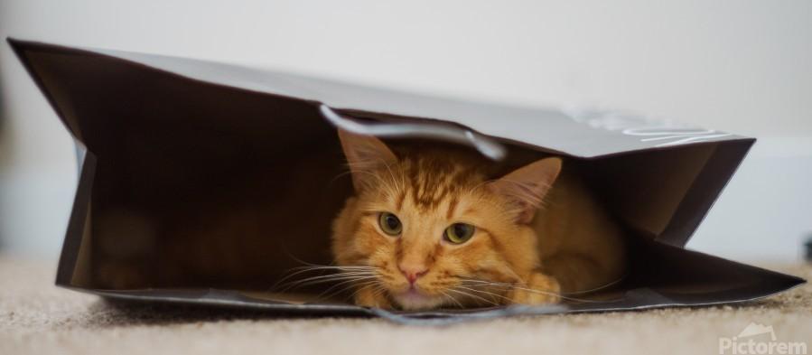 Cat In The Bag  Imprimer