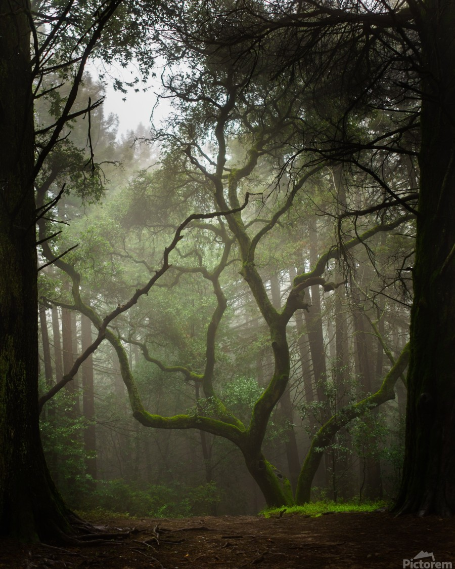 Clearing in the Woods  Imprimer