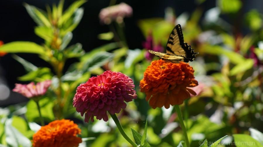 Gorgeous Flower Color  Print