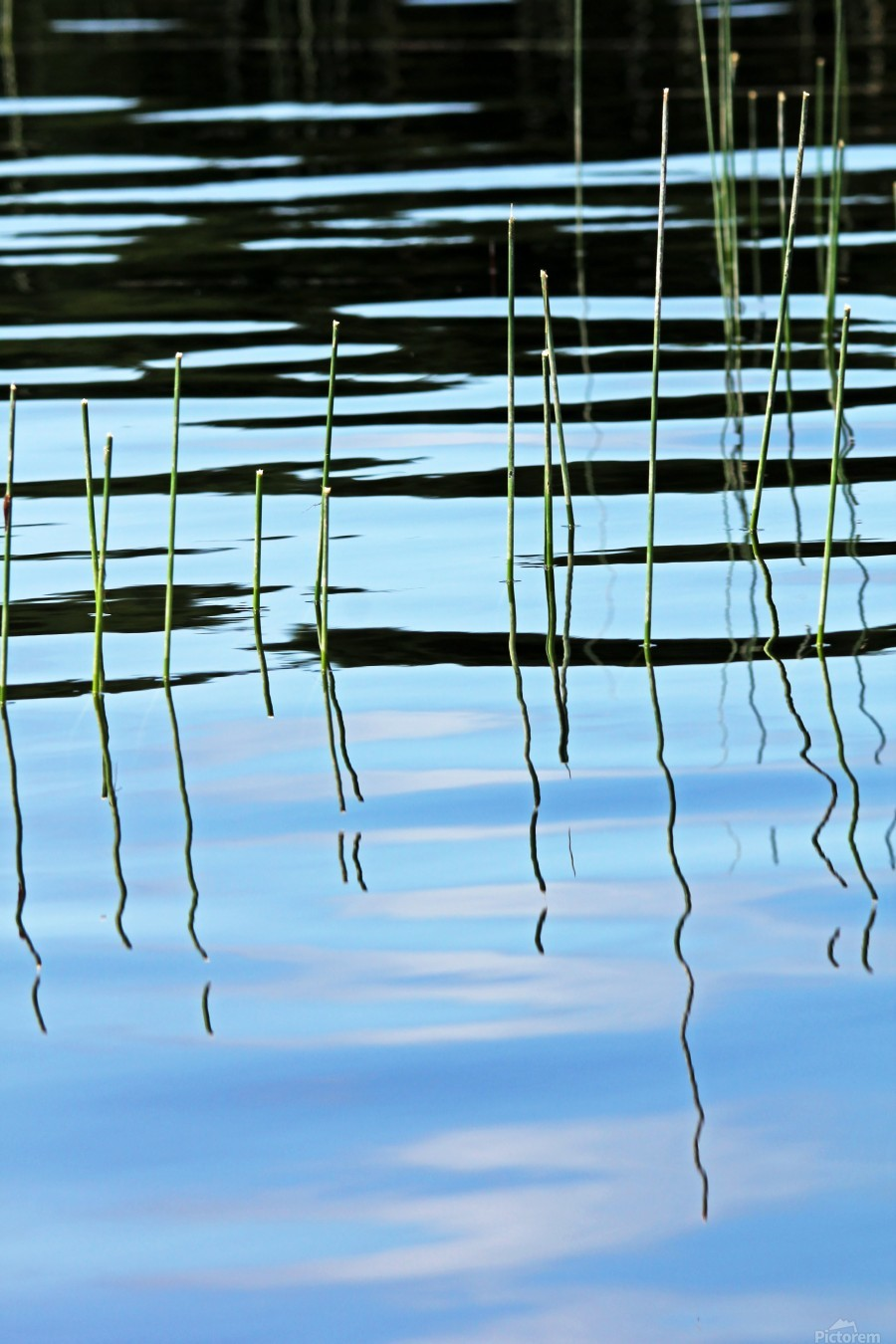 Reeds In The Shallows Abstract  Print