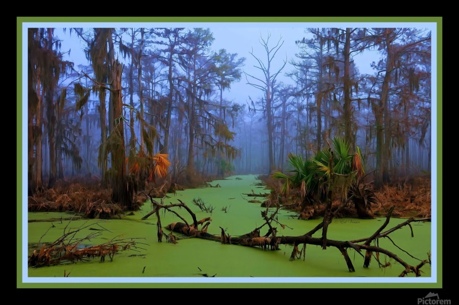 Jurassic Swamp  - HDR - Double Matted and Framed  Print