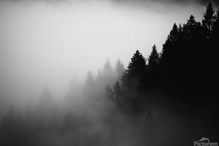 Pine trees in the fog  Print
